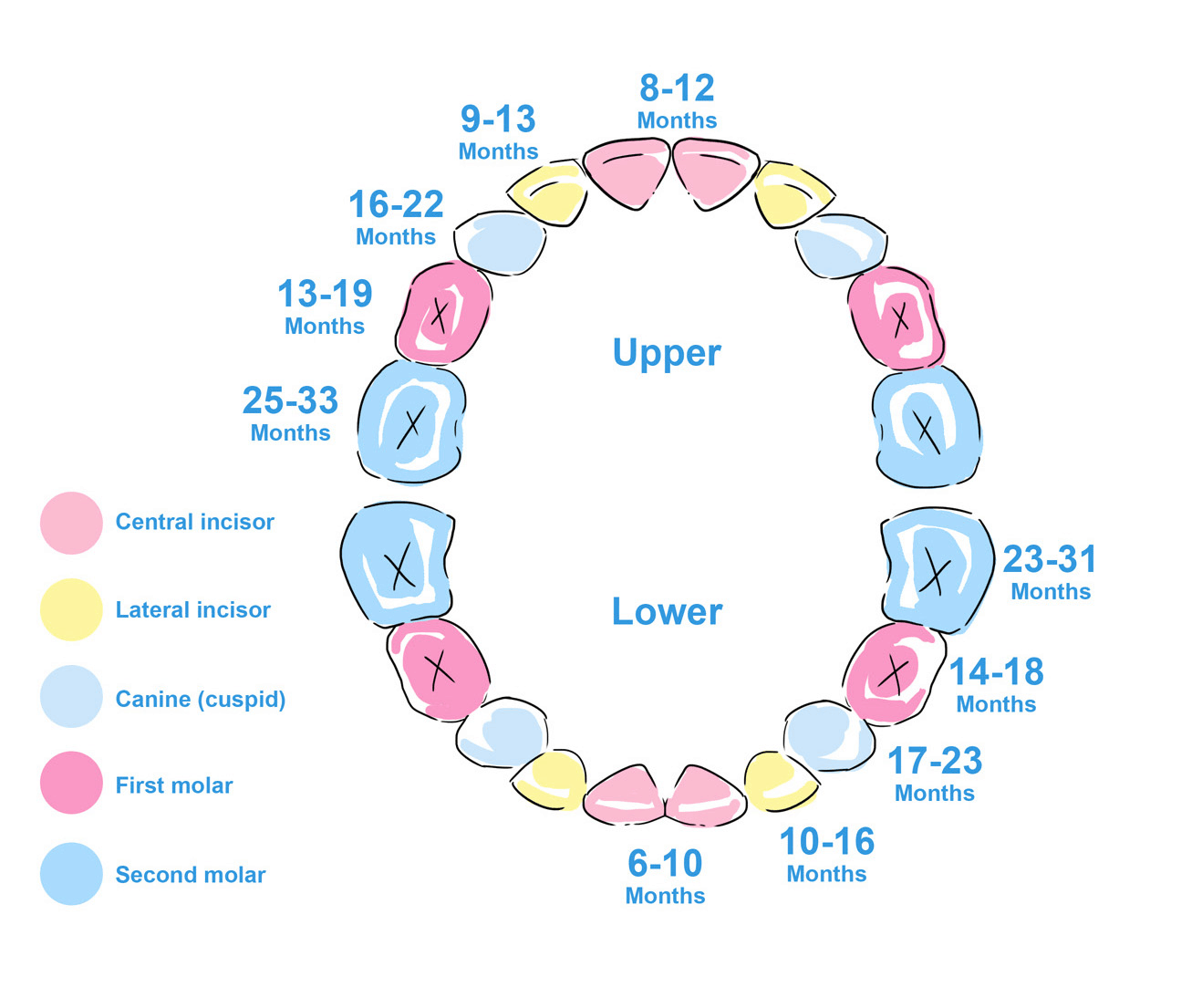 Advice About Teething